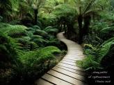 Psalm 23 paths